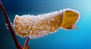 Pogoda nie oszczędzi plantatorów. Czekają nas majowe mrozy, a nawet opady śniegu