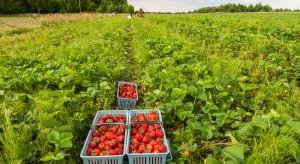 Rolnicy: Sztuczne podnoszenie stawek dla pracowników sezonowych nie ma sensu