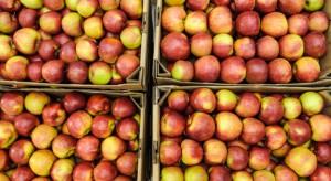 Mazowsze: Ceny jabłek deserowych wzrosły. Dochodzą do 1,5 zł/kg