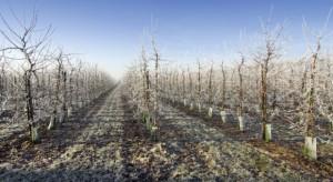 Resort rolnictwa: 4,3 mln zł wynoszą dotychczas oszacowane straty w rolnictwie