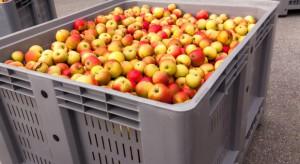 Belgijski doradca: Polscy sadownicy powinni przechowywać jabłka nawet do Bożego Narodzenia