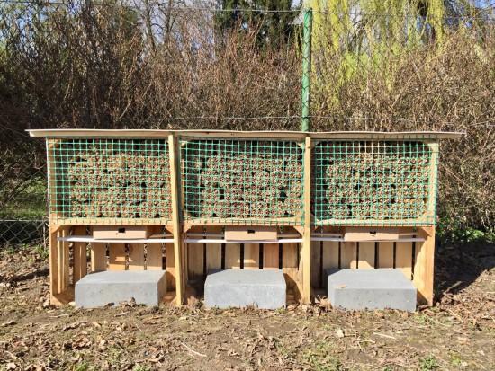 60000 kokonów murarki ogrodowej od Sumi Agro Poland w 2017 roku