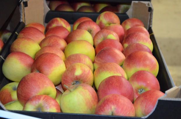 Niepewność co do tegorocznych zbiorów wpłynęła na ceny ubiegłorocznych jabłek