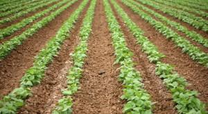 GUS: Plonowanie warzyw będzie zależało od przebiegu warunków podczas dalszej wegetacji
