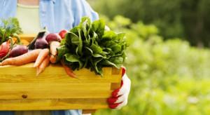 Polscy eko-konsumenci najchętniej kupują bio owoce i warzywa oraz jajka