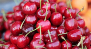 Pojawiają się pierwsze krajowe czereśnie. Ceny dochodzą do 18 zł/kg