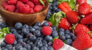 Owoce jagodowe podbijają europejski rynek. Kampania promocyjna przyniosła efekt