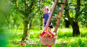 Prezes KRUS apeluje do rolników o zapewnienie bezpieczeństwa dzieciom podczas wakacji