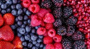 1 lipca obchodzimy Międzynarodowy Dzień Owoców oraz Dzień Polskiej Borówki