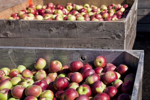 Rynek jabłek: Na początku czerwca przechowywanych było 144 tys. ton jabłek
