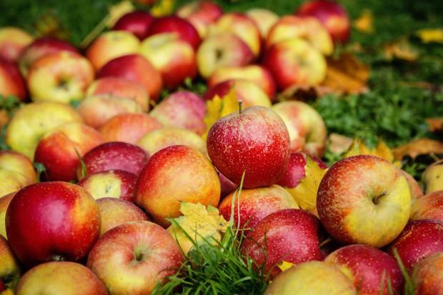 Rekordowe zbiory jabłek w Polsce ciążyły na ich cenach w sezonie 2016/17 - analiza