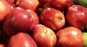 Analitycy: Wszystko wskazuje na ostry wzrost cen jabłek w nadchodzącym sezonie