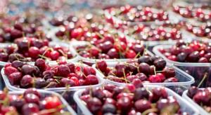 Rosną ceny czereśni w hurcie. Wahają się między 12-18 zł/kg