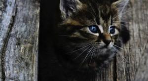 Ruszył proces sołtysa obwinionego o brak nadzoru nad kotem