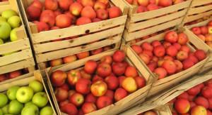 Białoruś: Ujawniono firmy, które zajmowały się reeksportem polskich jabłek do Rosji