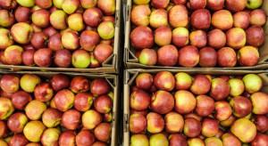 Ukraina: Ceny jabłek wczesnych odmian znacznie wyższe niż rok temu