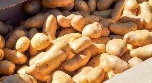 Ziemniaki pochodzące z eksportu zostaną poddane zaostrzonej kontroli