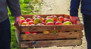Rynek jabłek – trzy lata po wprowadzeniu embarga przez Rosję