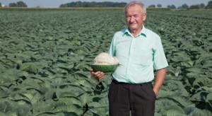 Tegoroczny sezon sprzyja uprawie warzyw kapustnych (video)