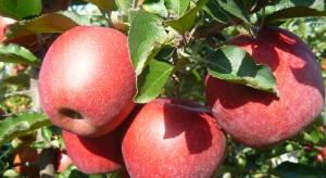 Muna nadzieją polskich sadowników i konsumentów