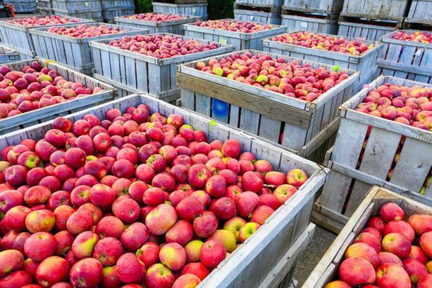 Rynek jabłek: Na początku lipca zapasy jabłek wynosiły 57 tys. ton