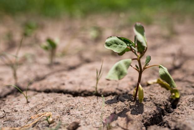 Komunikat IUNG: W lipcu ustąpiła susza rolnicza