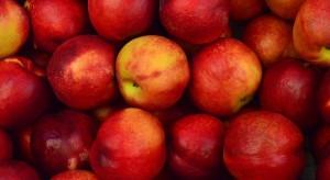 Mniejsze zbiory jabłek wcale nie muszą wpłynąć na wzrost cen