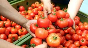 Rosja nie zamierza wznowić importu tureckich pomidorów