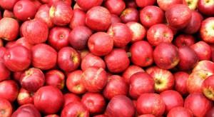 Mazowieckie: Ceny jabłek przemysłowych dochodzą do 80 gr/kg
