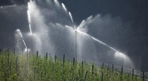 Nawadnianie sadów - drzewa rosnące w optymalnych warunkach plonują lepiej