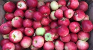 Bronisze: Koniec sezonu wiśniowego. Dostępne są krajowe śliwki i jabłka