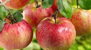 Prognosfruit 2017: Jaki będzie nowy sezon jabłkowy?