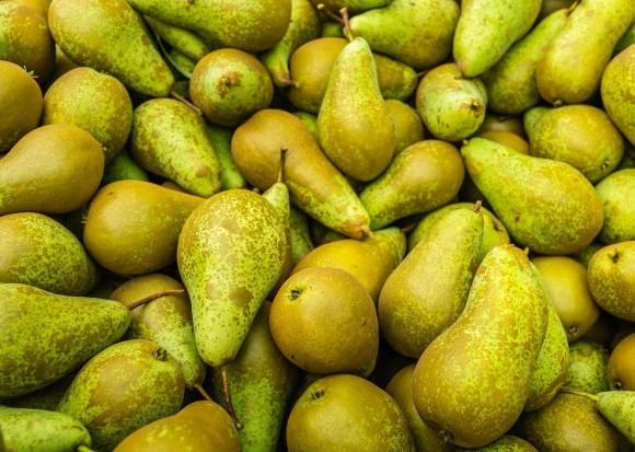 WAPA prognozuje niewielki spadek zbiorów gruszek w UE