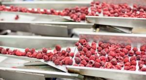 Polska ma szansę stać się głównym dostawcą mrożonych malin na rynku unijnym