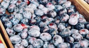 Kiepski sezon dla malin i aronii. Dobry dla jabłek, śliwek i rabarbaru