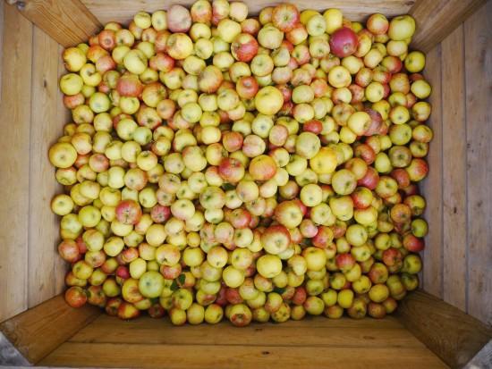 Możliwe są spadki cen jabłek przemysłowych. Mimo to pozostaną znacznie droższe niż rok temu