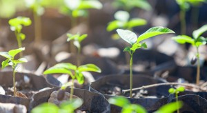 Nawozy dla upraw o dużych wymaganiach odnośnie potasu