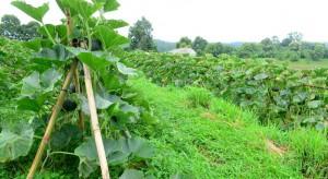 Nastał czas na dywersyfikację produkcji. Czym zastąpić jabłkowe sady?