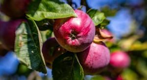 Ceny jabłek 2017: Ciągły trend zwyżkowy nie jest za bardzo realny