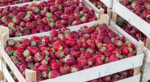 Holenderska firma SVZ stworzy na Ukrainie punkt skup owoców i warzyw