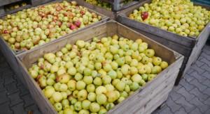 Mniejsza produkcja jabłek już znajduje odzwierciedlenie w cenach
