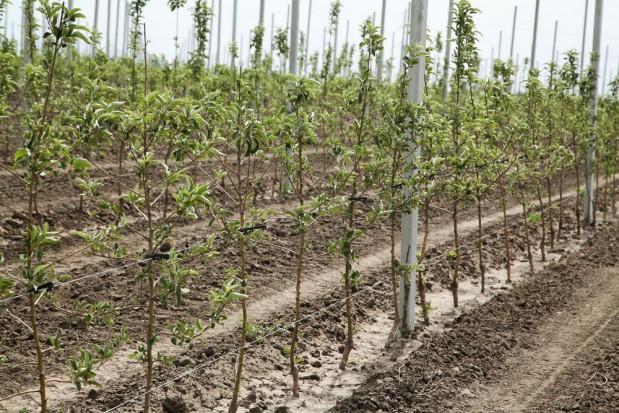 Kazachscy przedsiębiorcy interesują się polskimi drzewkami owocowymi