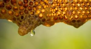 Podkarpacie: Słaby sezon pszczelarzy. Zbiory o połowę mniejsze niż w ubiegłym roku
