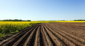 Wzrosły ceny ziemi rolnej