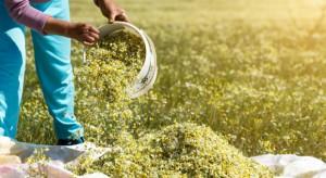 Rolnictwo ekologiczne – zmiany zasad udzielania dotacji
