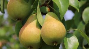 Nowy regulator do stosowania w uprawie jabłoni i gruszy od Arysta