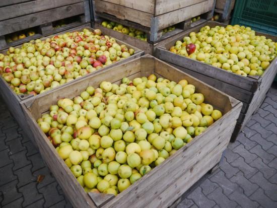 UOKiK o cenach jabłek: Nie było zmowy cenowej zakładów przetwórczych