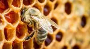 """KOWR zaprasza do składania projektów w ramach mechanizmu """"Wsparcie rynku produktów pszczelich"""""""