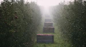 Pow. starachowicki: Gmina Mirzec zmienia profil - przestawia się na sadownictwo