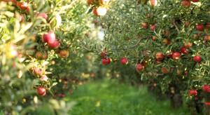 Mazowsze: Badania ankietowe ws. gatunków i odmian drzew w sadach